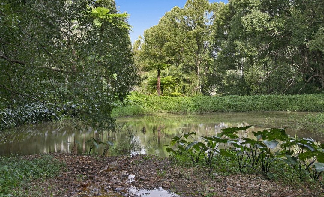 Explore the Potential of this 3.37ha Rainforest Paradise (PRD Burleigh Heads)
